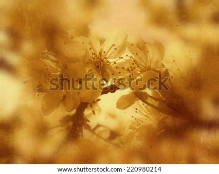 Textured grunge photo of spring blossom, retro effect background. - stock photo
