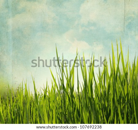 Textured nature background with grass and blue sky. Vintage style - stock photo