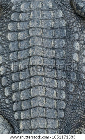 Textured Of Real Crocodile Skin Leather Background