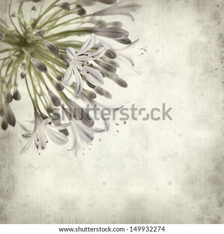 textured old paper background with African Lily - stock photo