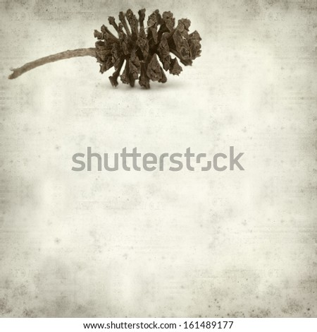 textured old paper background with alder cones