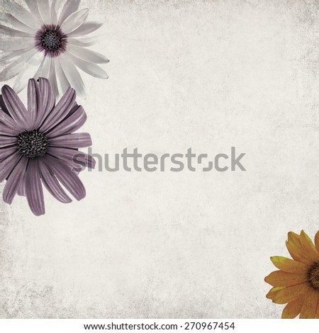 Textured old paper background with blossoming chamomile flowers ( Asteraceae)  - stock photo