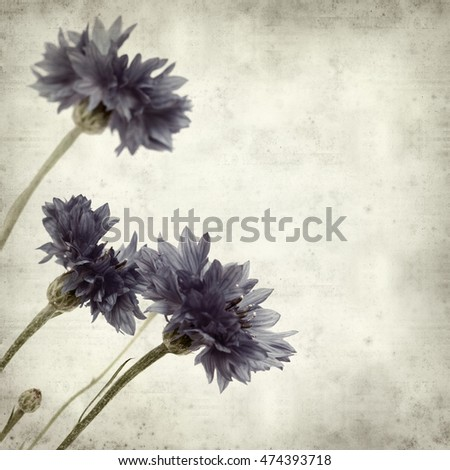 textured old paper background with blue cornflower