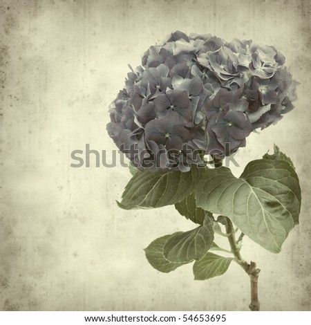 textured old paper background with blue hydrangea flower - stock photo