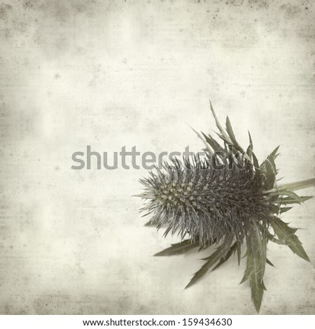textured old paper background with blue sea holly