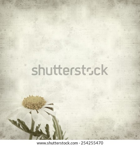 textured old paper background with  canarian marguerite daisy