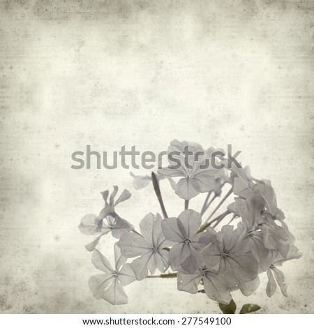 textured old paper background with Cape leadwort flowers