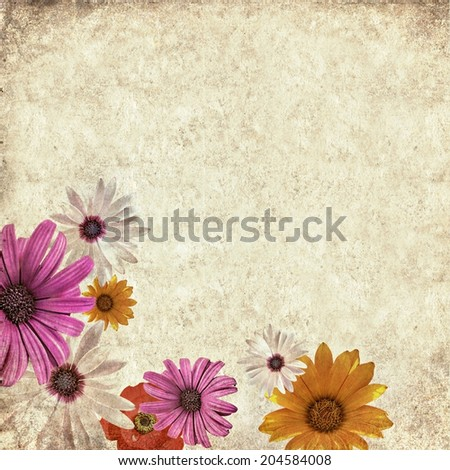 Textured old paper background with chamomile (camomile) flowers. Copy space is available  - stock photo