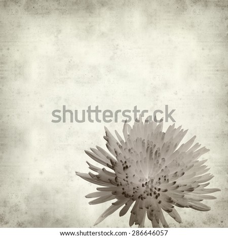 textured old paper background with  Chrysanthemum