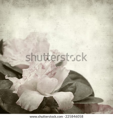 textured old paper background with double pink azalea