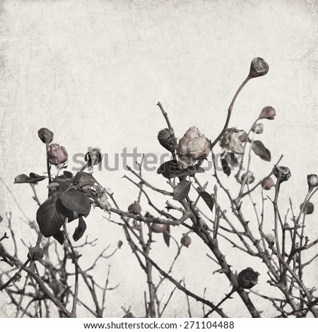 Textured old paper background with dry rose flowers - stock photo