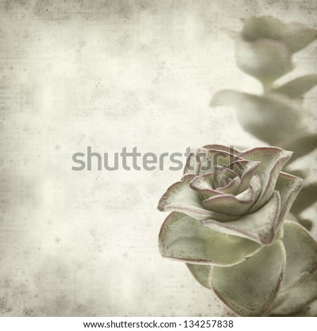 textured old paper background with echeveria;