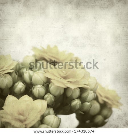 textured old paper background with flowering cactus