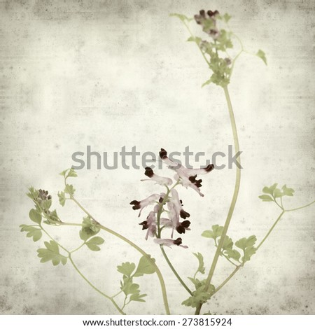 textured old paper background with flowering Fumaria plant  - stock photo