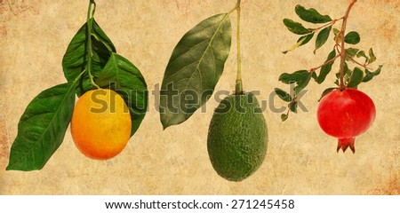 Textured old paper background with fruits on a branch. Ripe orange fruit, pomegranate and avocado - stock photo