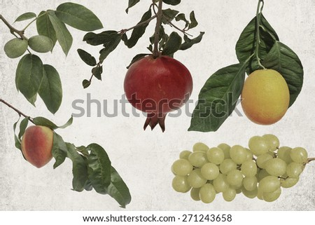Textured old paper background with fruits on a branch. Ripe peach fruit, orange, pomegranate,walnuts and grape cluster  - stock photo