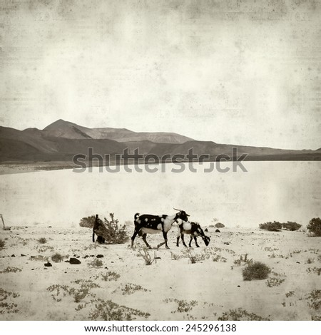 textured old paper background with goats of Fuerteventura