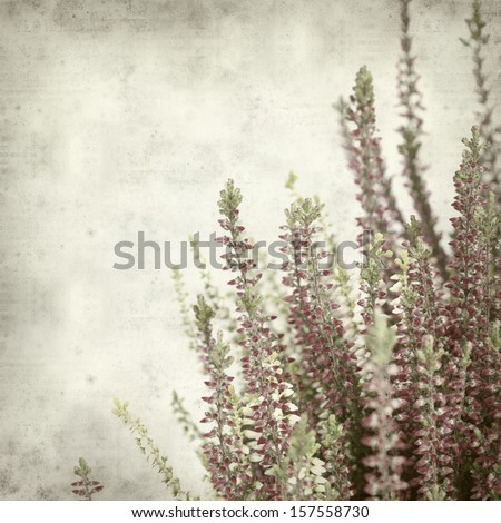 textured old paper background with heather - stock photo