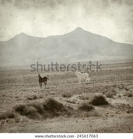 textured old paper background with horses on  Fuerteventura
