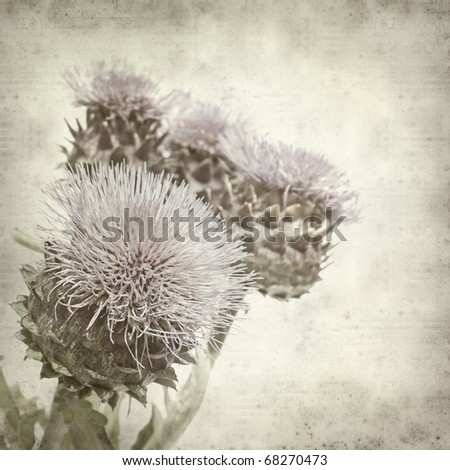 textured old paper background with lilac Cynara cardunculus, Cardoon Artichoke Thistle
