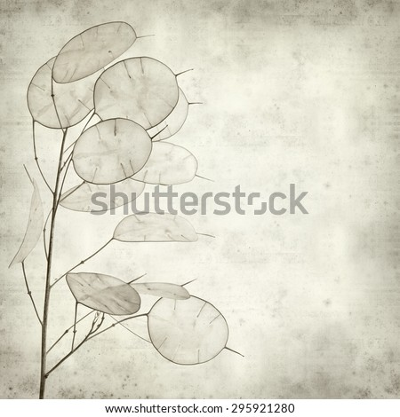 textured old paper background with Lunaria annua, silver dollar plant - stock photo