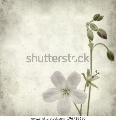 textured old paper background with meadow cranesbill