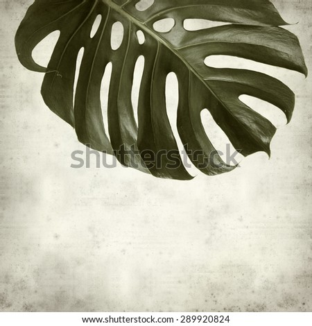 textured old paper background with monstera plant leaf - stock photo
