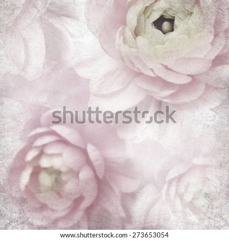 Textured old paper background with natural blurred pink buttercup flowers  - stock photo