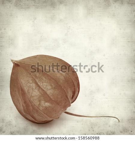 textured old paper background with orange autumnal physalis lantern - stock photo