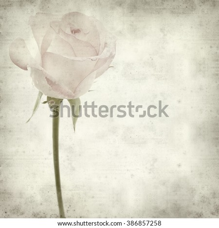 textured old paper background with pale pink rose flower - stock photo