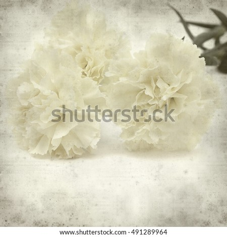 textured old paper background with pale yellow carnation flower