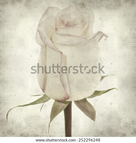 textured old paper background with pastel colored variegated rose  - stock photo