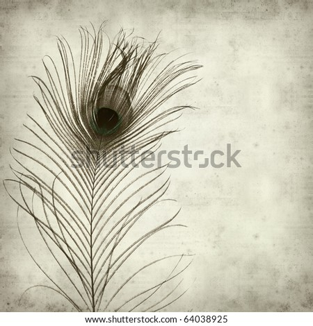 textured old paper background with peacock feather