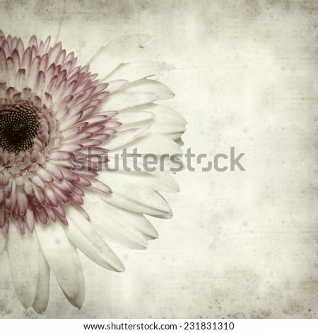 textured old paper background with pink and white gerbera