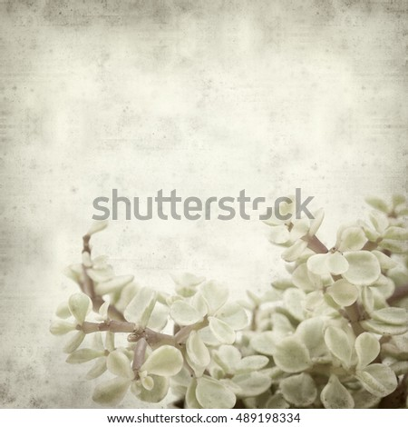 textured old paper background with Portulacaria afra succulent plant