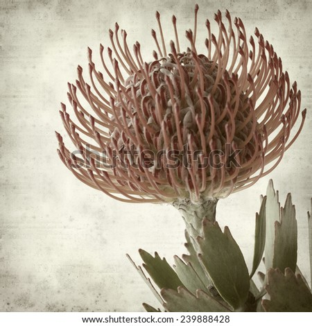 textured old paper background with protea - stock photo