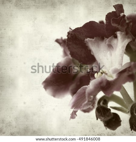 textured old paper background with red and white african violet