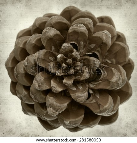textured old paper background with Stone pine cones - stock photo