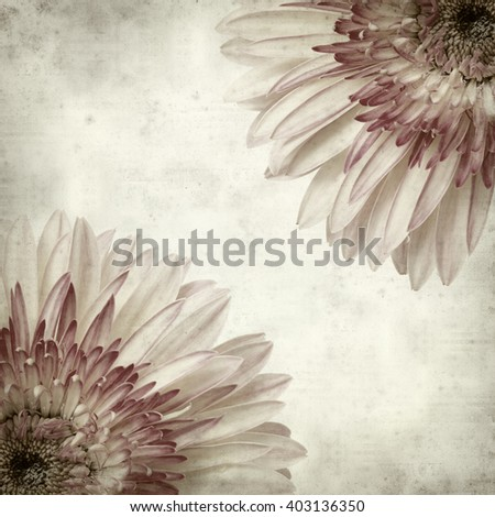 textured old paper background with white and pink gerbera - stock photo