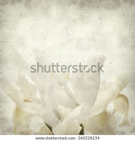 textured old paper background with white and yellow iris flower