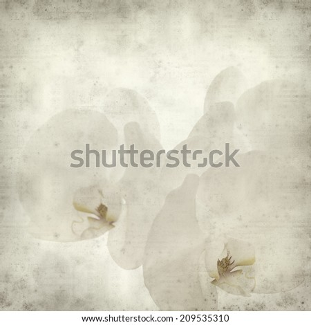 textured old paper background with white orchid