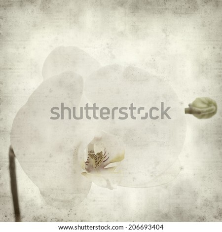 textured old paper background with white Phalaenopsis orchid