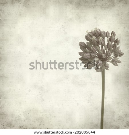 textured old paper background with wild leek flowers