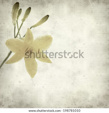 textured old paper background with yellow daylily