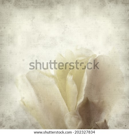 textured old paper background with yellow opuntia cactus flower