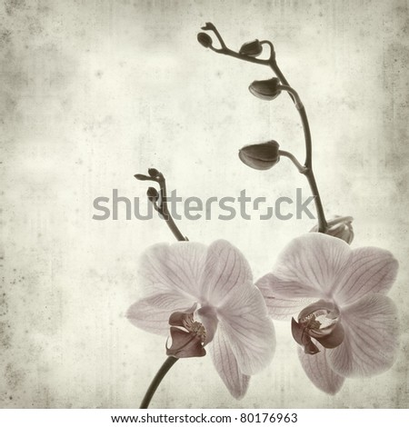 textured old paper background withphalaenopsis; - stock photo