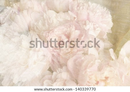Textured pink roses background