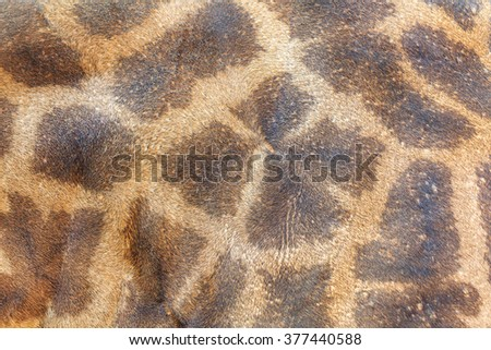 textured skin of giraffe - stock photo