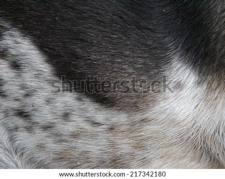 Textures of Dog Fur - stock photo