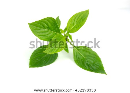 Thai Basil, also know as Common Basil on white background